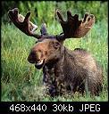 Κάντε click στην εικόνα για μεγαλύτερο μέγεθος.  Όνομα:moosedm20.jpg Προβολές:161 Μέγεθος:30,2 KB ID:402799