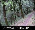 Κάντε click στην εικόνα για μεγαλύτερο μέγεθος.  Όνομα:agrafa_13_14_10_2007-009.jpg Προβολές:240 Μέγεθος:59,9 KB ID:110223