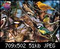 Κάντε click στην εικόνα για μεγαλύτερο μέγεθος.  Όνομα:many.jpg Προβολές:72 Μέγεθος:50,6 KB ID:4842
