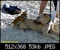 Κάντε click στην εικόνα για μεγαλύτερο μέγεθος.  Όνομα:animals 004.jpg Προβολές:31963 Μέγεθος:52,7 KB ID:2014