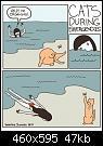 Κάντε click στην εικόνα για μεγαλύτερο μέγεθος.  Όνομα:cats-help-Cat-Versus-Human-comics-1532051.jpeg Προβολές:4676 Μέγεθος:47,4 KB ID:362707