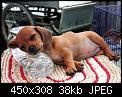 Κάντε click στην εικόνα για μεγαλύτερο μέγεθος.  Όνομα:animali pose strane 3.jpg Προβολές:127 Μέγεθος:37,5 KB ID:17219