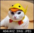 Κάντε click στην εικόνα για μεγαλύτερο μέγεθος.  Όνομα:kotek3.jpg Προβολές:112 Μέγεθος:30,1 KB ID:17226