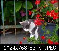 Κάντε click στην εικόνα για μεγαλύτερο μέγεθος.  Όνομα:hSm1ao.jpg Προβολές:254 Μέγεθος:82,6 KB ID:416368