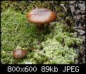 Κάντε click στην εικόνα για μεγαλύτερο μέγεθος.  Όνομα:p1000391_1.jpg Προβολές:2934 Μέγεθος:89,4 KB ID:210565