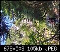 Κάντε click στην εικόνα για μεγαλύτερο μέγεθος.  Όνομα:IMG_20200908_123203_resize_96.jpg Προβολές:139 Μέγεθος:104,7 KB ID:420849