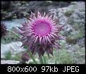 Κάντε click στην εικόνα για μεγαλύτερο μέγεθος.  Όνομα:16.jpg Προβολές:245 Μέγεθος:96,7 KB ID:88709