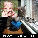 Κάντε click στην εικόνα για μεγαλύτερο μέγεθος.  Όνομα:sniper cat1.jpg Προβολές:214 Μέγεθος:38,1 KB ID:40756