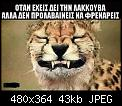 Κάντε click στην εικόνα για μεγαλύτερο μέγεθος.  Όνομα:40287390_1849812171767406_5299739220900839424_n.jpg Προβολές:1014 Μέγεθος:42,8 KB ID:399448