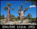 Κάντε click στην εικόνα για μεγαλύτερο μέγεθος.  Όνομα:Botswana7.jpg Προβολές:541 Μέγεθος:101,2 KB ID:336671