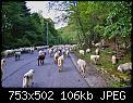 Κάντε click στην εικόνα για μεγαλύτερο μέγεθος.  Όνομα:DSC_1060-1.jpg Προβολές:138 Μέγεθος:105,7 KB ID:408425