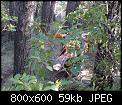 Κάντε click στην εικόνα για μεγαλύτερο μέγεθος.  Όνομα:dsc00038_edited-1.jpg Προβολές:2021 Μέγεθος:59,3 KB ID:121501