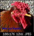 Κάντε click στην εικόνα για μεγαλύτερο μέγεθος.  Όνομα:hawkclose501.jpg Προβολές:100 Μέγεθος:11,7 KB ID:2307