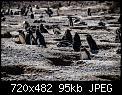 Κάντε click στην εικόνα για μεγαλύτερο μέγεθος.  Όνομα:pinguinera-camarones-7230-2.jpg Προβολές:541 Μέγεθος:95,3 KB ID:318260